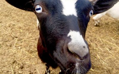 A Lost Calf and a Powerful Spiritual Lesson