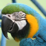 Harley Finds a Macaw to Love, Part 3 of 3