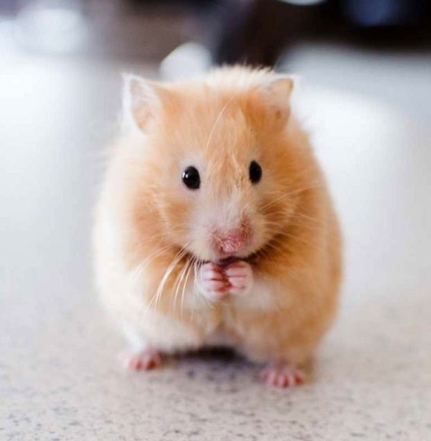 The Hamster Who Taught Me Compassion