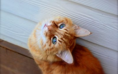 Feral-Cat Creativity