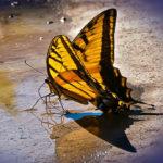Can a Butterfly Teach Love?