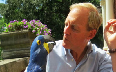 A Hyacinth Macaw's Wings of Love