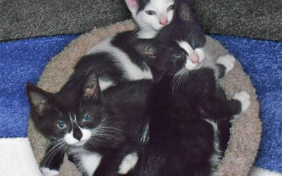 A Senior Citizen Gives Love and Service to Kittens