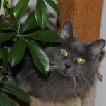 The Cat with Destiny, Free Will, and a Spiritual Guide