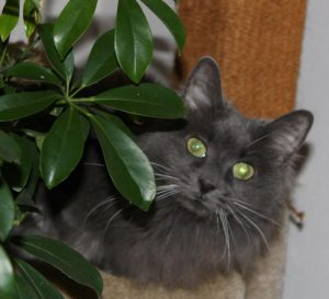 The Cat with Destiny, Free Will, and a Spiritual Guide - Animals Are