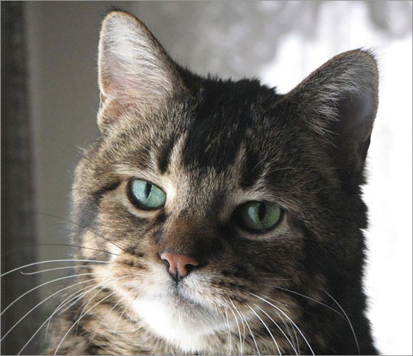 A Special Cat Saves Lucinda's Life
