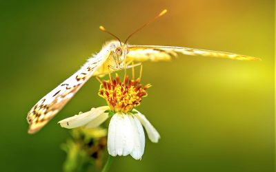 Rose and the Golden Moth