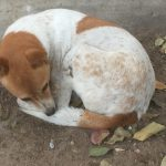 A Street Dog Teaches Spiritual Lessons