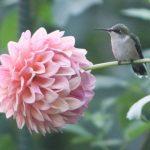 A Hummingbird Teaches Patience