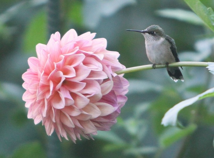 A Hummingbird Teaches Patience