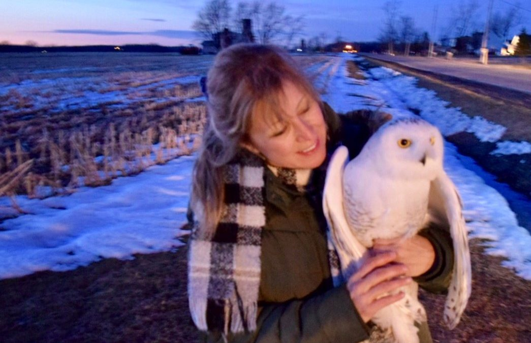 Adventure with a Snowy Owl