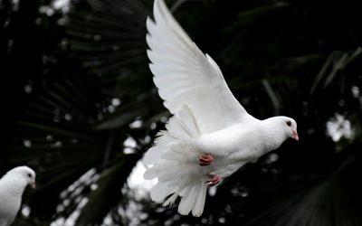 The Grateful Dove