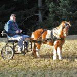 A Horse Heals My Heart