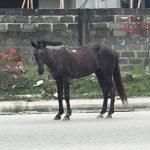 """Singing """"HU"""" to a Horse in Nigeria"""