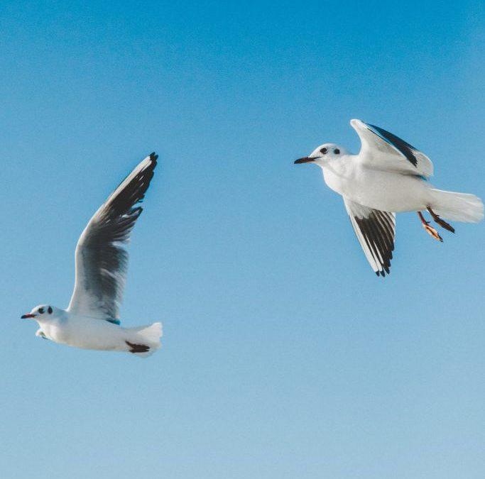 Seabird Rescue