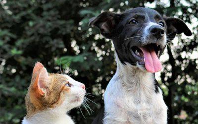How Pets Bring Healing