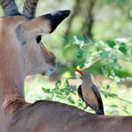 """A Wider Audience Hears about Eckankar's """"Animals Are Soul"""" Blog"""