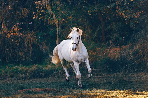 The Horse Who Opened My Heart to Love