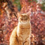 A Spiritual Community for Shane, the Cat