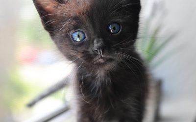 Divine Love Brings a Lost Kitten Home