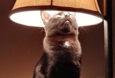 A Cat Teaches that Love is Eternal
